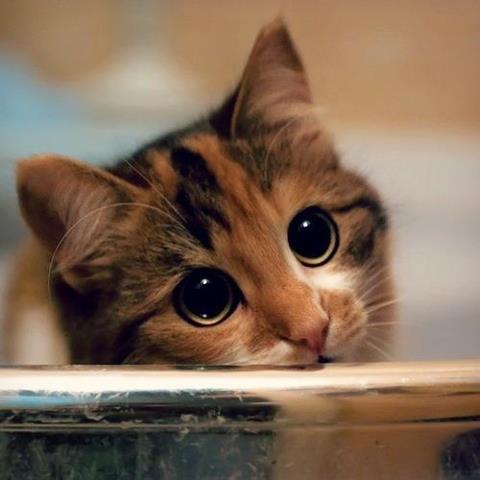 üzgün kedi resmi